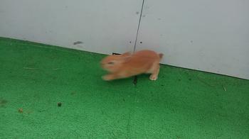 0215 ウサギ3.JPG