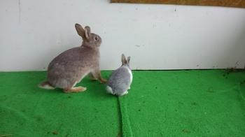0215 ウサギ4.JPG