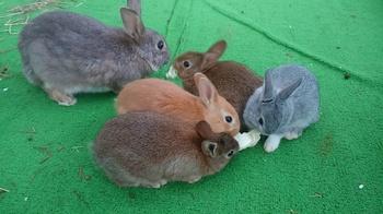 0215 ウサギ5.JPG